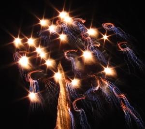 fireworksTREEoflife