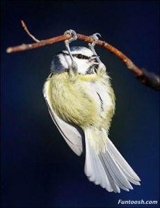 birdexercise